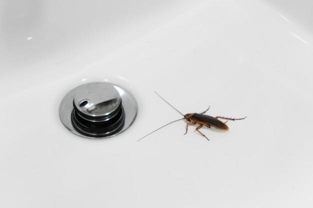 usuwanie insektów